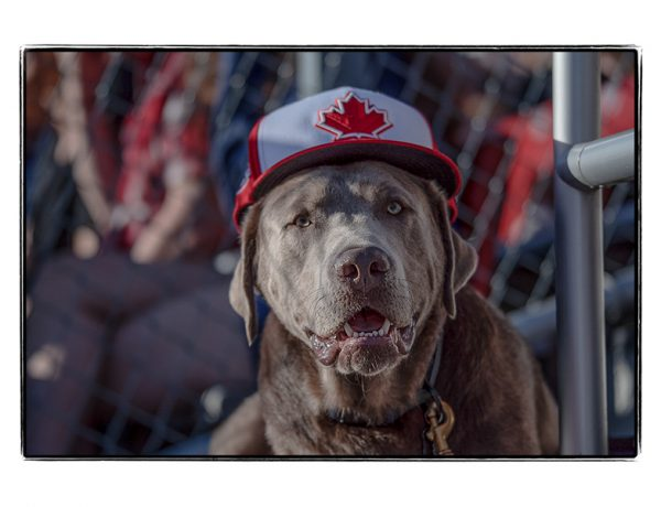 Photos: Dog Day Of Summer 2019 | Nat Bailey Stadium